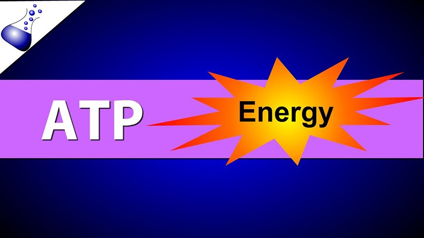 Why is ATP Testing Important?