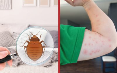 Do Not Let the Bed Bug Bite